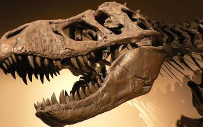 Dia do Paleontólogo – 7 de março